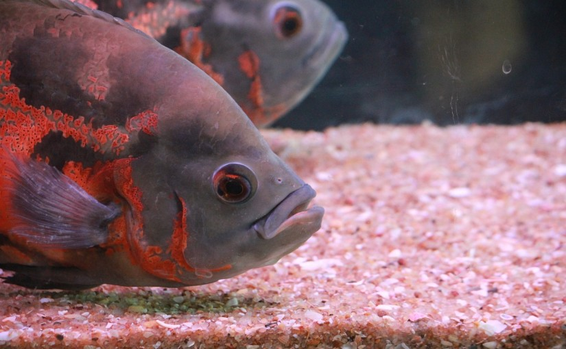 fish-389881_1280