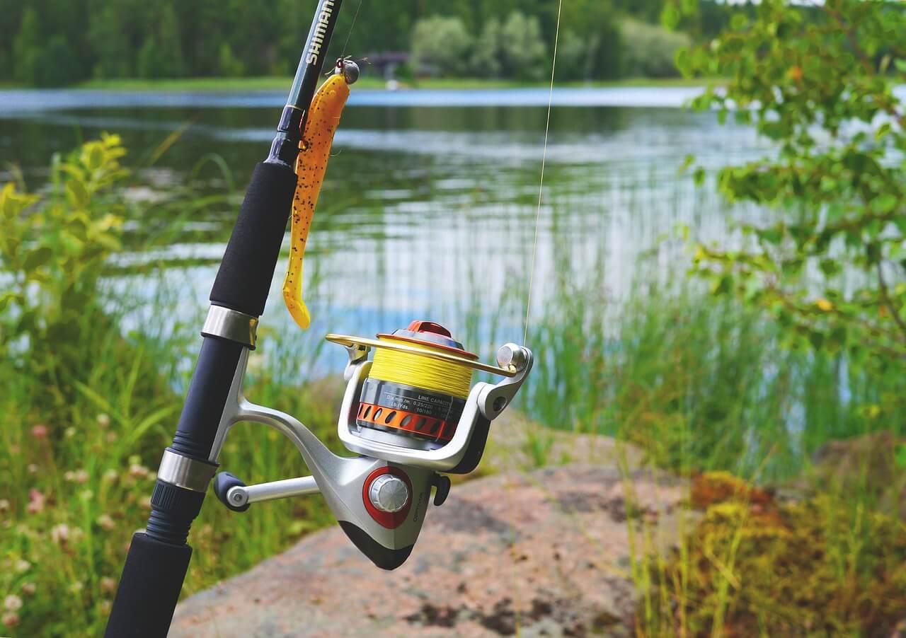 fish-887522_1280